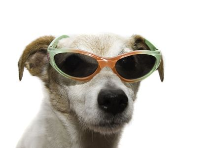 humor glasses: a cool dog