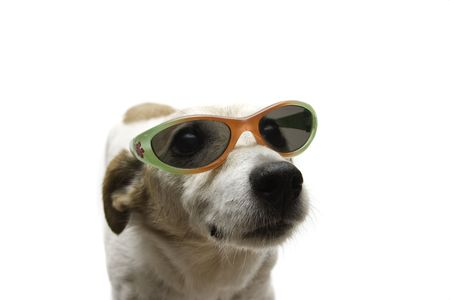 jack russel: dog looking up