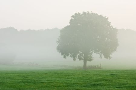 tree in misty meadow photo