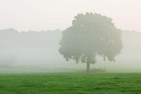tree in misty meadow photo
