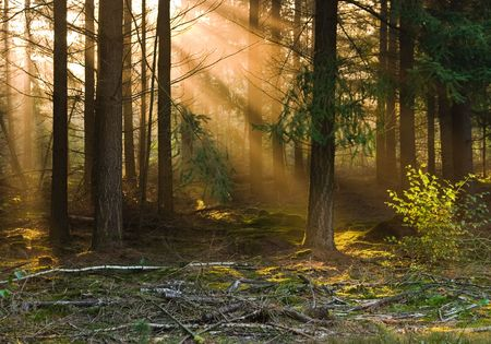 sunbeams falling through the trees on a misty morning Stock Photo - 1789020