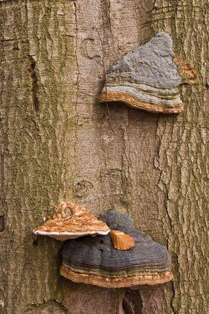 fairy toadstool: mushrooms Stock Photo