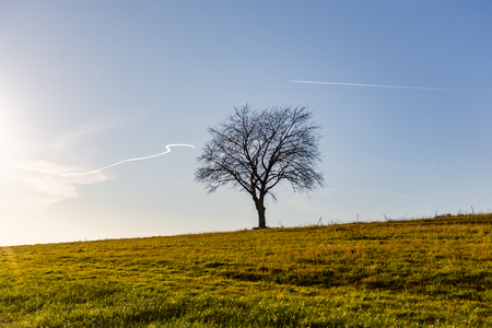 single tree siluette twigs and branches on grass field against blue sky with condensation trail airplane trail setting sun sunset