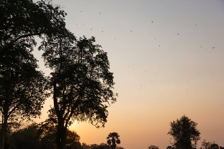 silhouette of trees in the jungle against setting sun in beautiful pastel colors with birds flying around