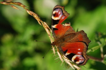 raggedy: Raggedy butterfly Stock Photo