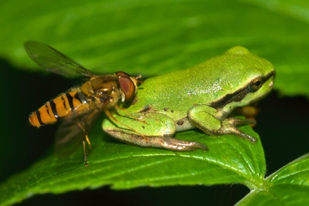 treefrog: Life in nature