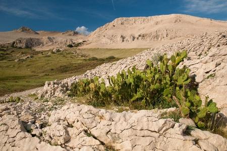 Spring canyon photo
