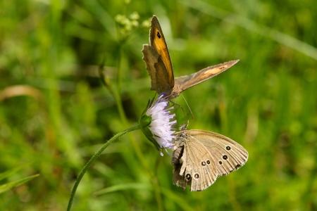 Two butterflies Stock Photo - 14633568
