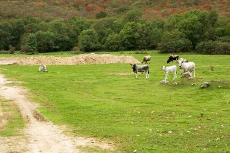 krk: Croatian pastures on the island of Krk