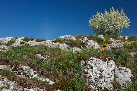 Spring in South Moravia, Czech Republic, Europe Stock Photo