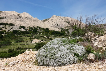 Landscape on the island of Krk, locality Zala Draga, Croatia, Europe