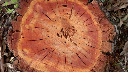 accepts: cut tree Stock Photo