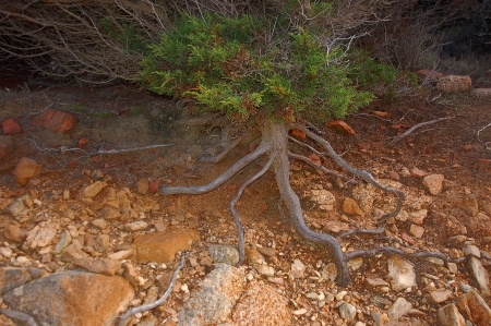deep roots:  tree roots