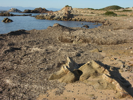 invaded: beach invaded by algae