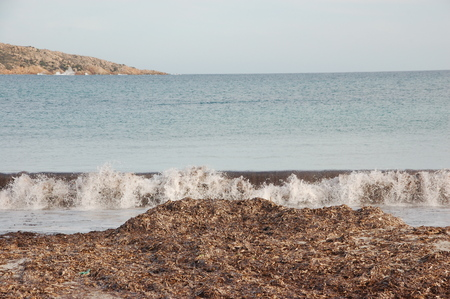 sea ??waves on algae Stock fotó