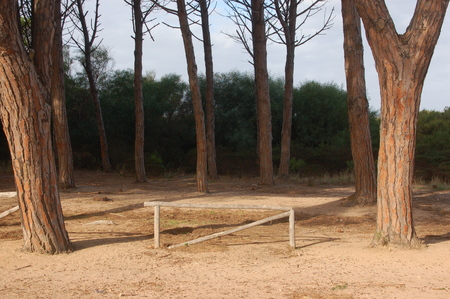 protection for entry into a pine forest