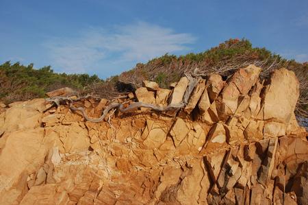 Tree in the granite rock Stock fotó