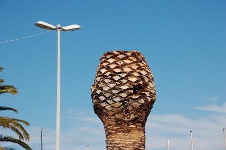 old palm tree (b)