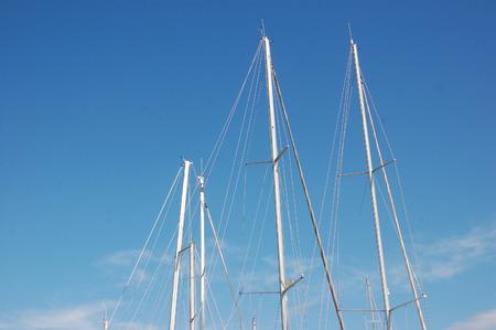 sail trees (a) Stock fotó