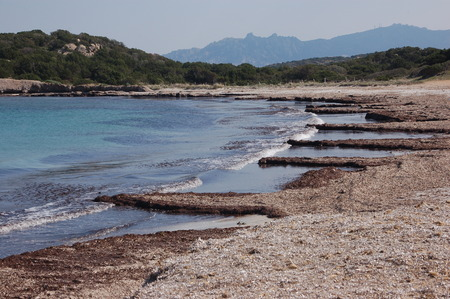 algae beach (b)