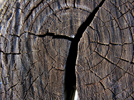 inner section of a pine tree trunk
