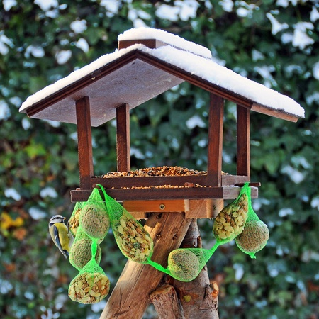 fat bird: Bird feeder in Winter