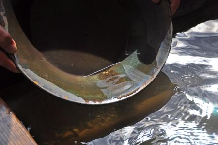 gold rush: Gold panning