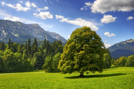 Large tree in mountain scenery photo