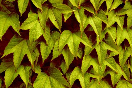 closeup of leaves Stock Photo - 388643