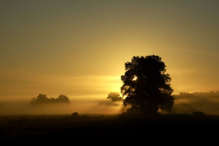beautiful september morning with fog in holland