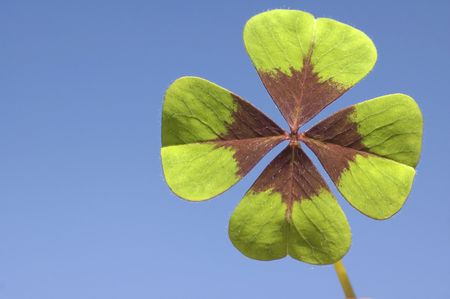 Four leaf clover with blue background on a sunny day. Stock Photo - 980868