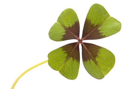 Isolated four leaf clover Stock Photo - 980871
