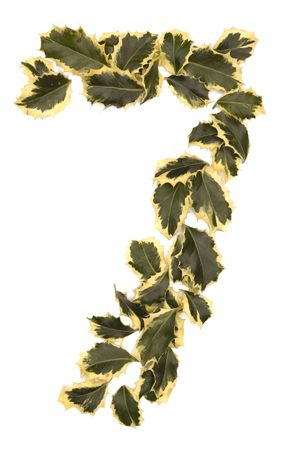 Holly Leaves in the form of the digit seven. Isolated on white. photo