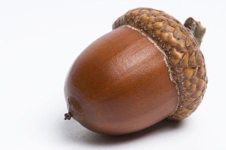 Simple macro image of an acorn isolated on white. Фото со стока