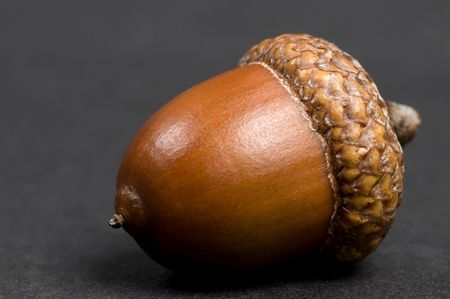 Simple macro picture of an acorn on a black background. photo