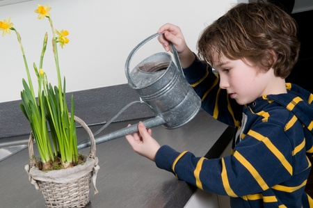 Young boy watering some yellow narcissus Stock Photo - 8789317