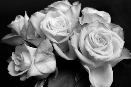rosas negras: Primer de un par de rosas, en blanco y negro Foto de archivo