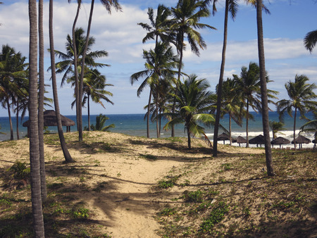 coconut palms tree on the beach in Imbassai, Northeastern Brazil Stockfoto