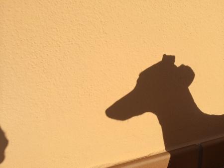 Shadow of dog