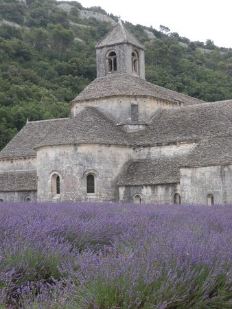 Senaques Abbey lavander flower orchard at Gordes Luberon Provence France