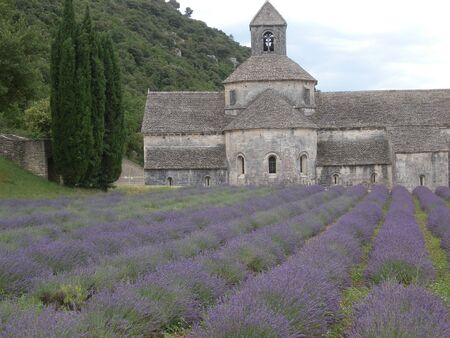 enaque's Abbey lavander flower orchard at Gordes Luberon Provence France Foto de archivo