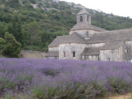 enaques Abbey lavander flower orchard at Gordes Luberon Provence France
