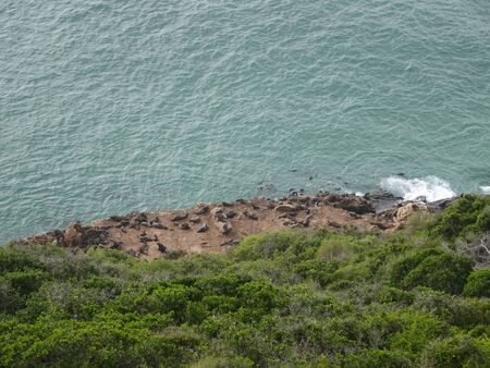 Colony of Sea Lions Robberg Nature Reserve