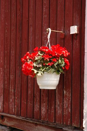 Hanging pot wiht with geraniums flowers in facade finnish house 版權商用圖片