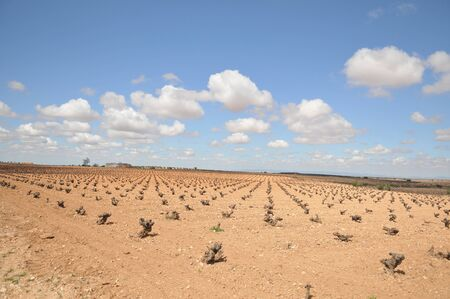 Mancha fields with vines strains in Valdepe�as village Spain