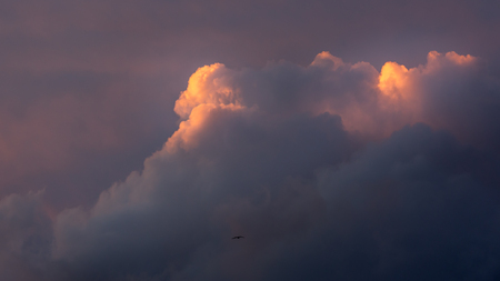 Clouds catching the sun and a bird Stock Photo