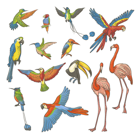Vector kleurrijke geweven schetsreeks die op een witte achtergrond met de hand wordt getrokken. Verzameling van heldere exotische tropische vogels. Geïsoleerde schetsillustratie een verscheidenheid van flamingo's, papegaaien en kolibries.