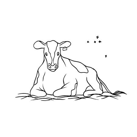 Animale da fattoria vettoriale. Mucca giovane rosso macchiato con etichetta sull'orecchio sdraiato sul fieno e mastica erba, volando intorno vola. Schizzi la produzione isolata colorata dell'illustrazione di latte e di manzo.