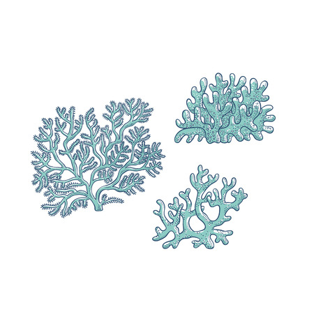 Vector set corals. Three types polyps monochrome outline sketch illustration isolated on white background for design of tourist cards logos on marine theme.
