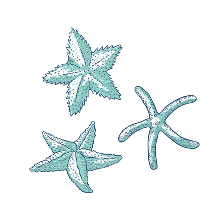 Vector set starfish. Three types sea star monochrome outline sketch illustration isolated on white background for design of tourist cards logos on marine theme.
